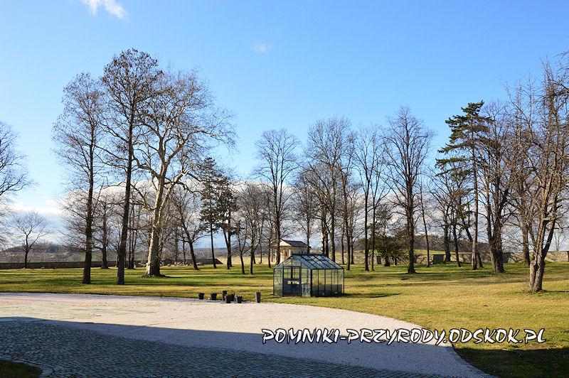 park przy pałacu w Żelazowie (gm. Strzegom)
