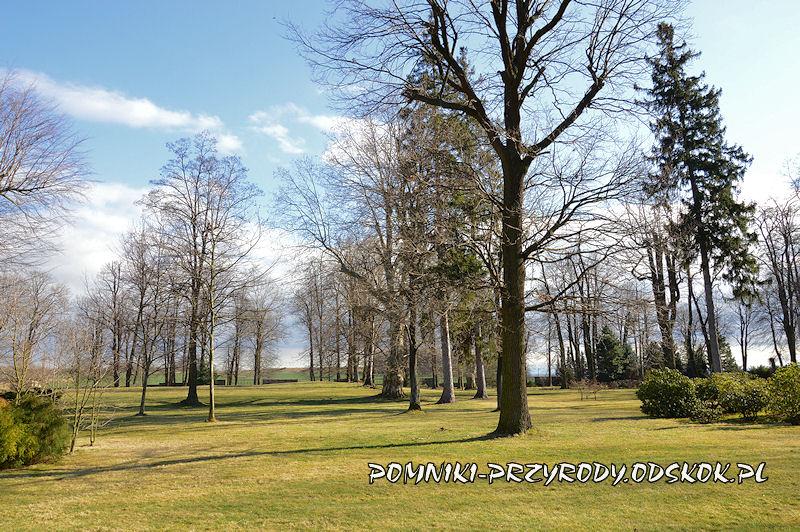 zabytkowy park w Żółkiewce