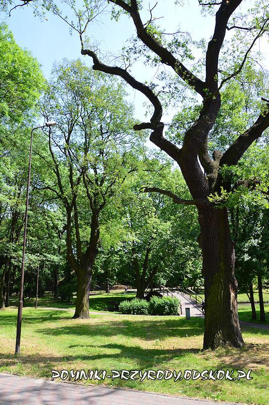 Park nad Strumykiem w Głogowie - pomnikowe dęby Kacper i Maciej