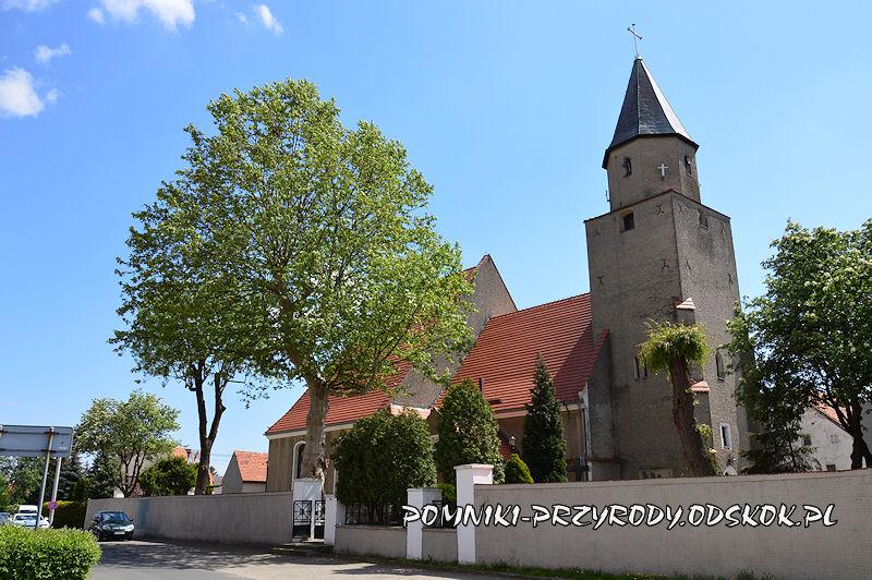pomnikowy platan na terenie kościoła w Kunicach