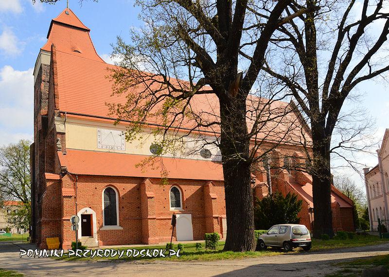Bierutów - pomnikowe dęby na tle kościoła św. Katarzyny