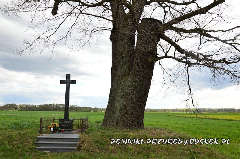 krzyż przy pomnikowym dębie w Duczowie Wielkim