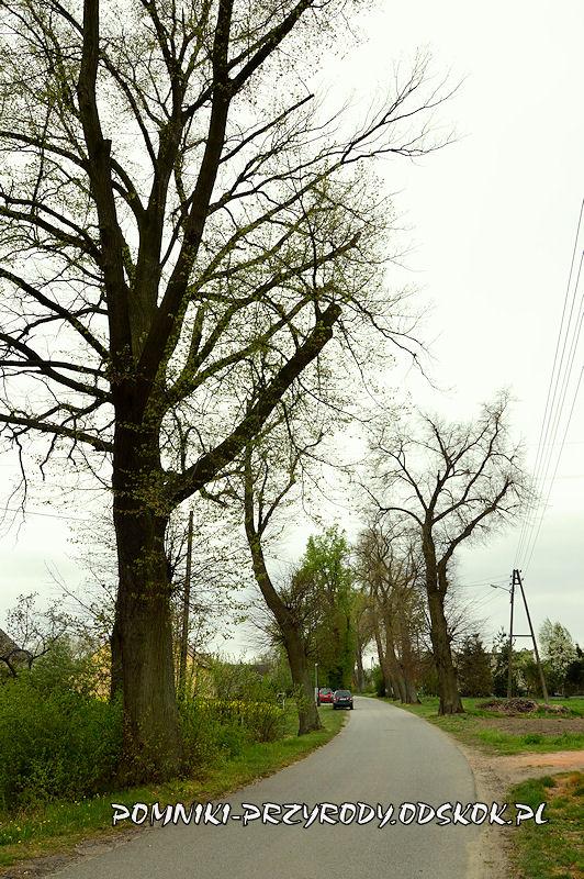 2. Pomnikowa aleja w Gręboszowie