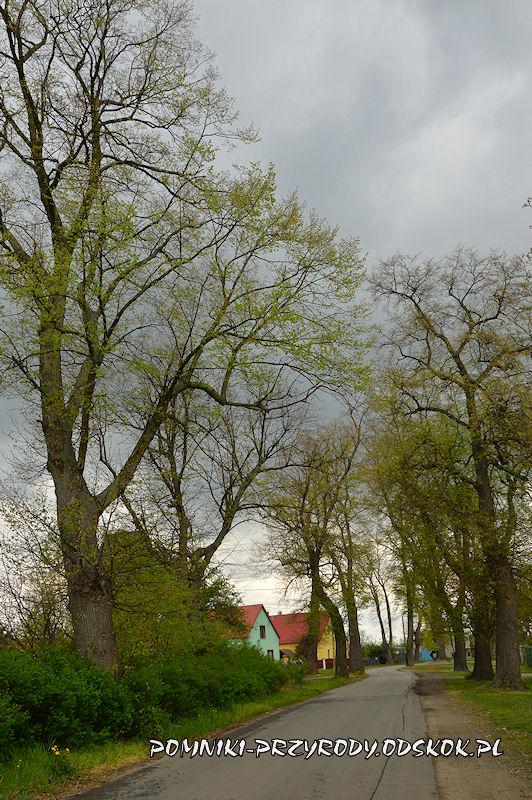 7. Pomnikowa aleja w Gręboszowie