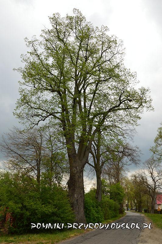 8. Pomnikowa aleja w Gręboszowie