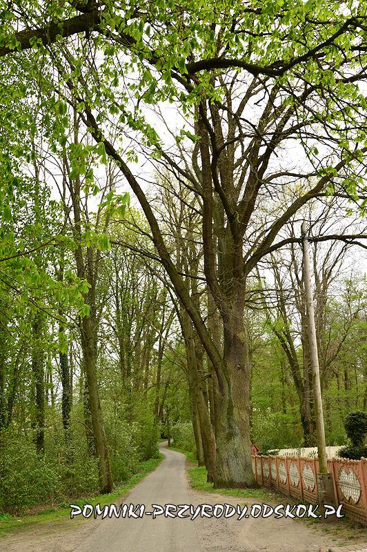 Jakubowice - droga przecinająca park
