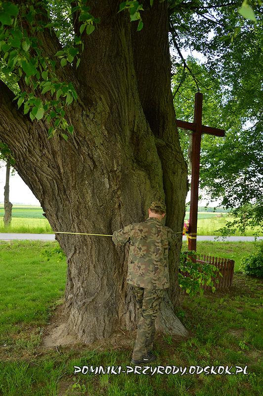 Jakubowice - pomiar pomnikowej lipy
