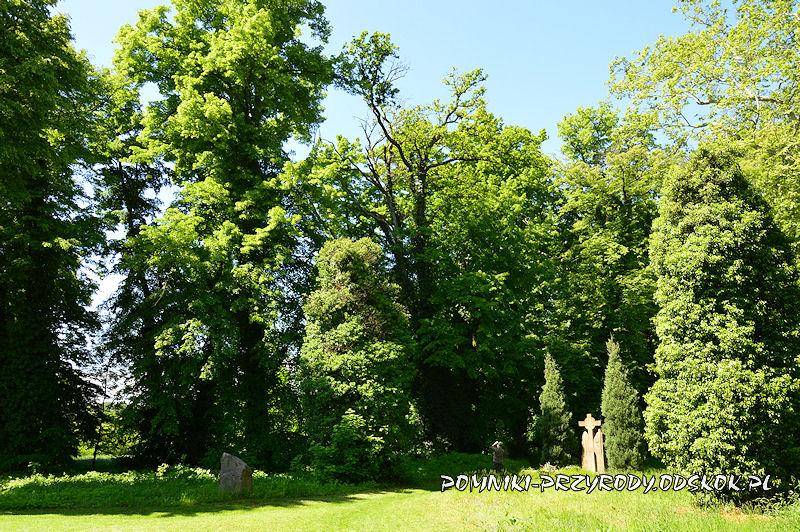 stary cmentarz w Gręboszowie latem