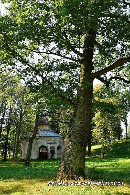 park w Gorzanowie - drugi z pomnikowych dębów