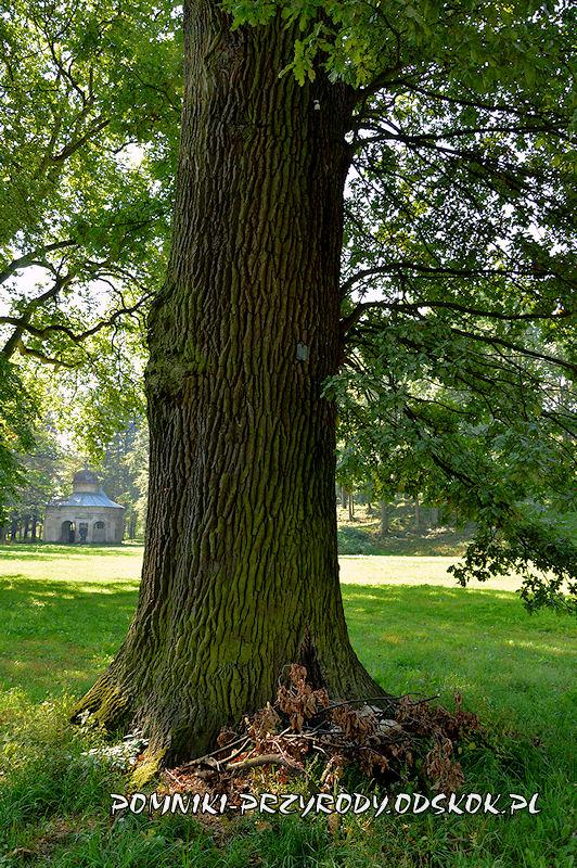 park w Gorzanowie - pień pomnikowego dębu I