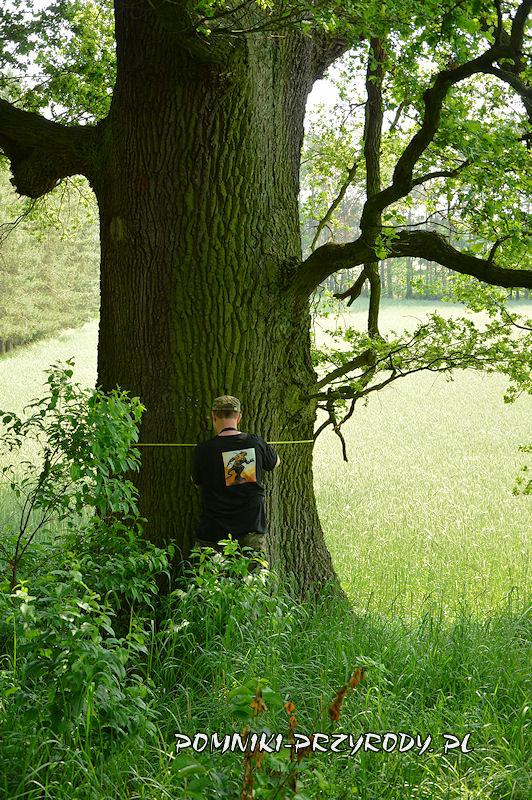 las k. wsi Kraszów - pomiar pomnikowego dębu
