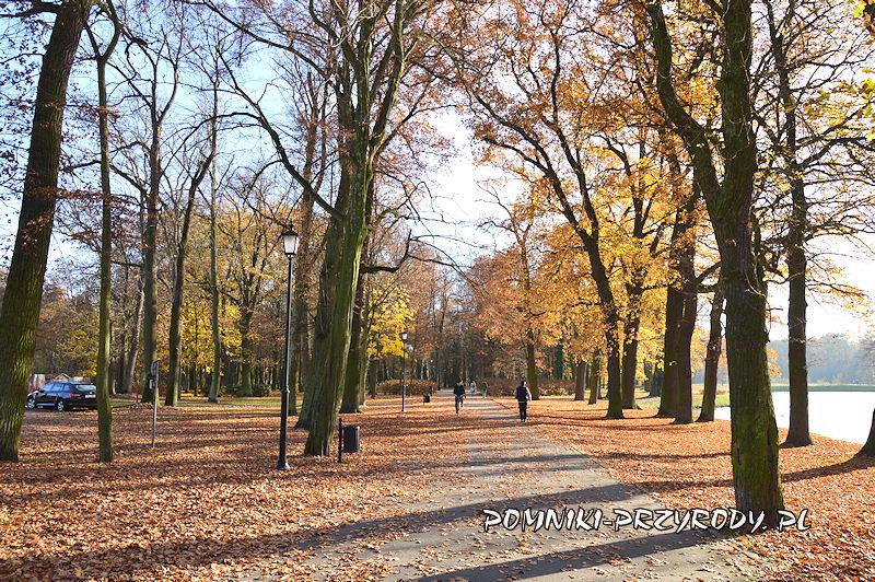 Park Miejski w Sycowie - aleja biegnąca wzdłuż stawu
