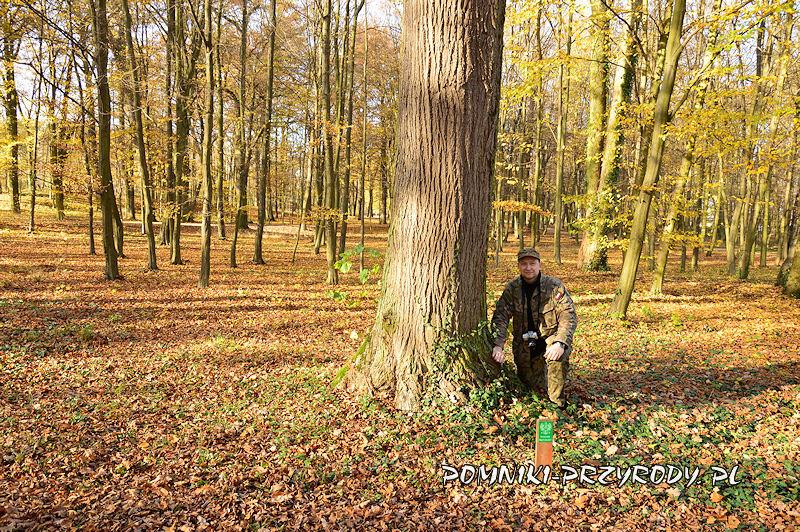 Park Miejski w Sycowie - pień pomnikowej lipy