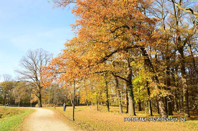 Park Miejski w Sycowie w jesiennych barwach