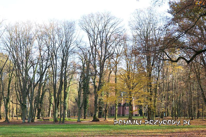 południowa część parku w Sycowie
