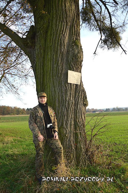 9. Stradomia Wierzchnia - pomnikowa lipa z zawieszoną tablicą