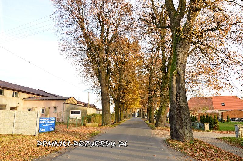 aleja dębowa we wsi Stradomia Wierzchnia