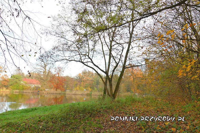 staw na skraju parku w Stradomii Wierzchniej