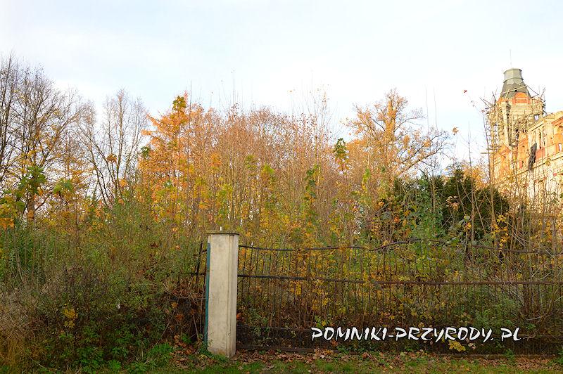 zarastający park w Stradomii Wierzchniej