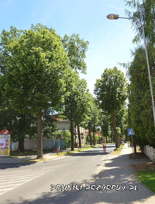 1. Początek pomnikowej alei w Nowogrodźcu