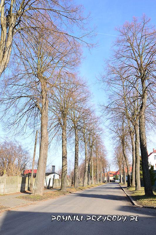 15. Pomnikowa aleja lipowa w Nowogrodźcu