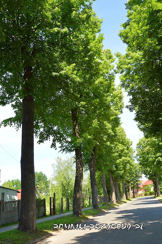 16. Pomnikowa aleja lipowa w Nowogrodźcu