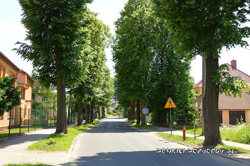 2. Pomnikowa aleja lipowa w Nowogrodźcu