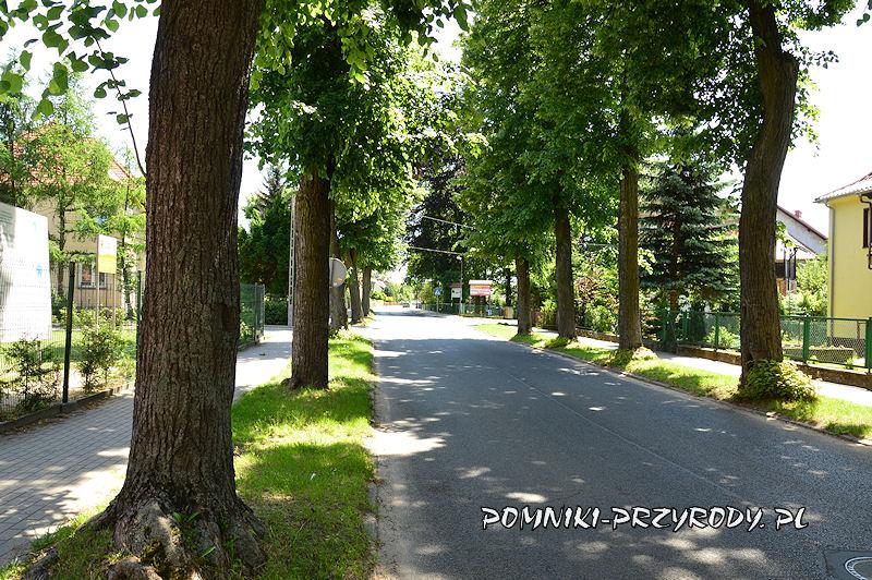 3. Pomnikowa aleja lipowa w Nowogrodźcu