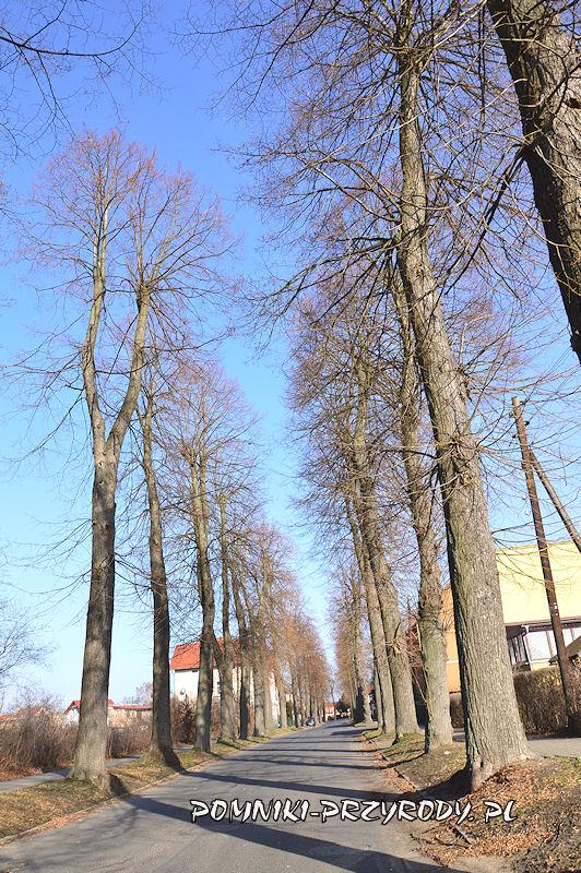 9. Pomnikowa aleja lipowa w Nowogrodźcu