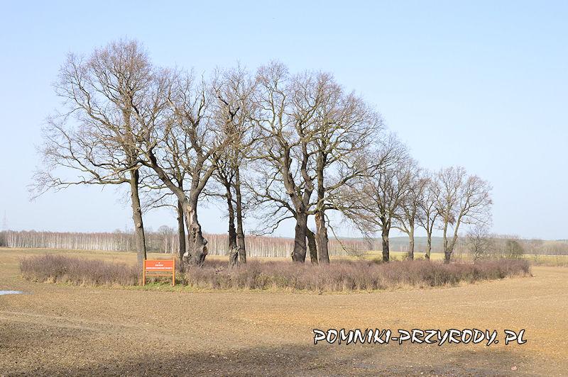 Zadrzewienia śródpolne - grupa drzew nr 1