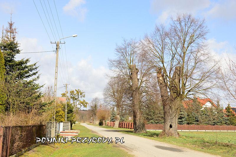 2. Radzowice - pomnikowa aleja lipowa