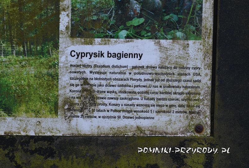 Godzieszowa - fragment tablicy przy pomnikowym cypryśniku