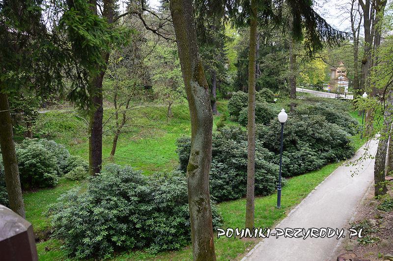 Park Różaneczników na początku maja