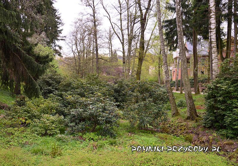 Park Różaneczników wczesną wiosną