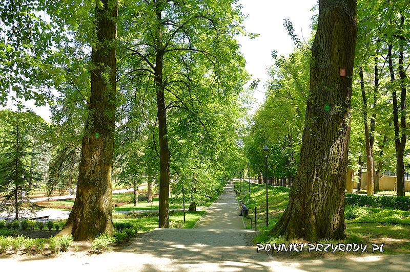 para pomnikowych topól w polanickim parku